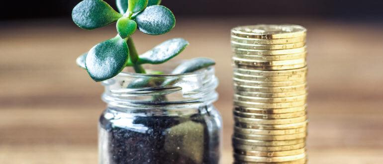 Как привлечь деньги при помощи денежного дерева по фэншую