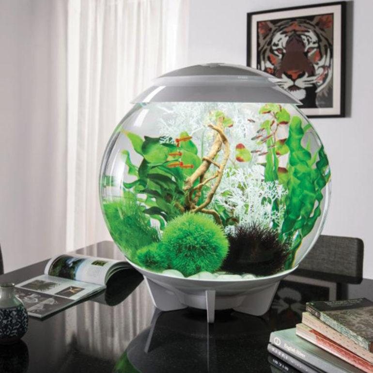 Аквариум для денежной лягушки